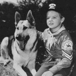 """Un'immagine tratta dalla serie tv degli anni '50 """"Le avventure di Rin Tin Tin"""""""