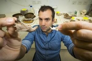 Un ricercatore mostra alcune delle ossa fossili dei ratti giganti trovati a Timor Est