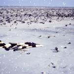Jaguar vanille chocolat au dessus du Tchad