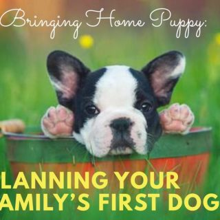 Bringing Home Puppy: Planning Your Family's First Dog