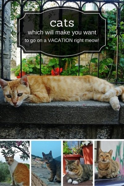 Cats on your travels
