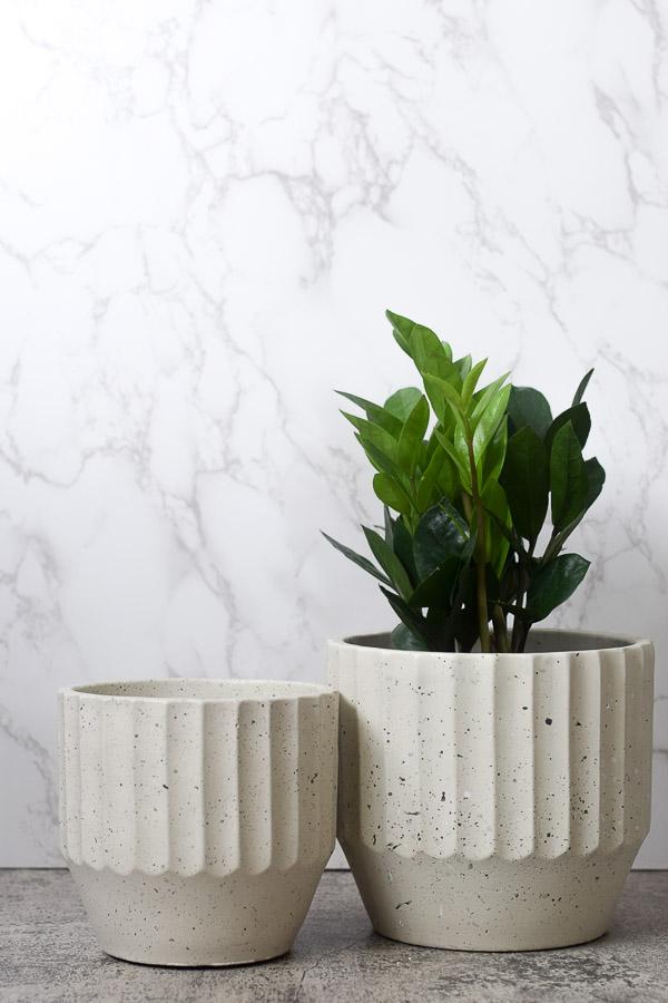 zamioculcas zamiifolia styled in macy planter 2 sizes