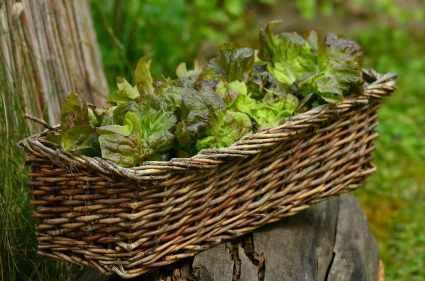 Salad in a bowl or basket.
