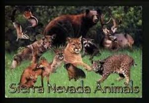 Sierra Nevada Animals