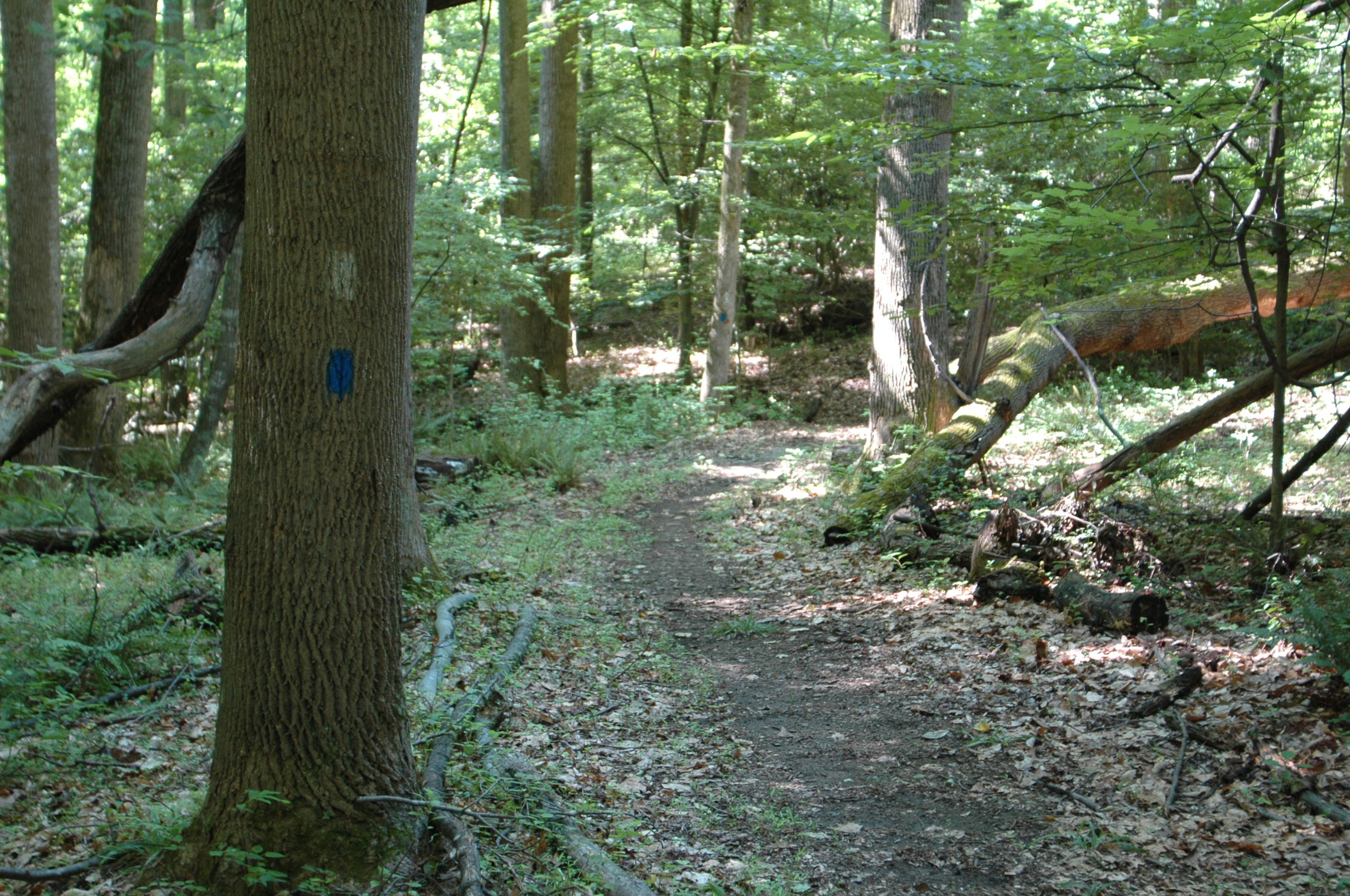 Pine Tree's hiking trail showing trail markers.