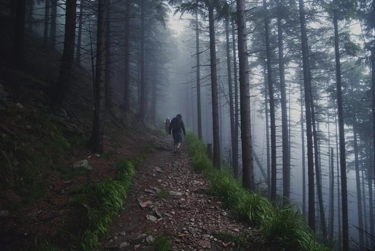 Śnieżnik pogoda, las, schronisko