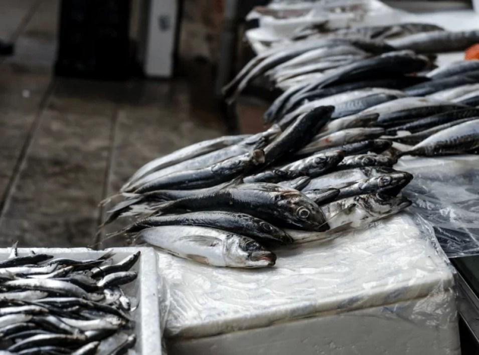 targ porto swieze ryby