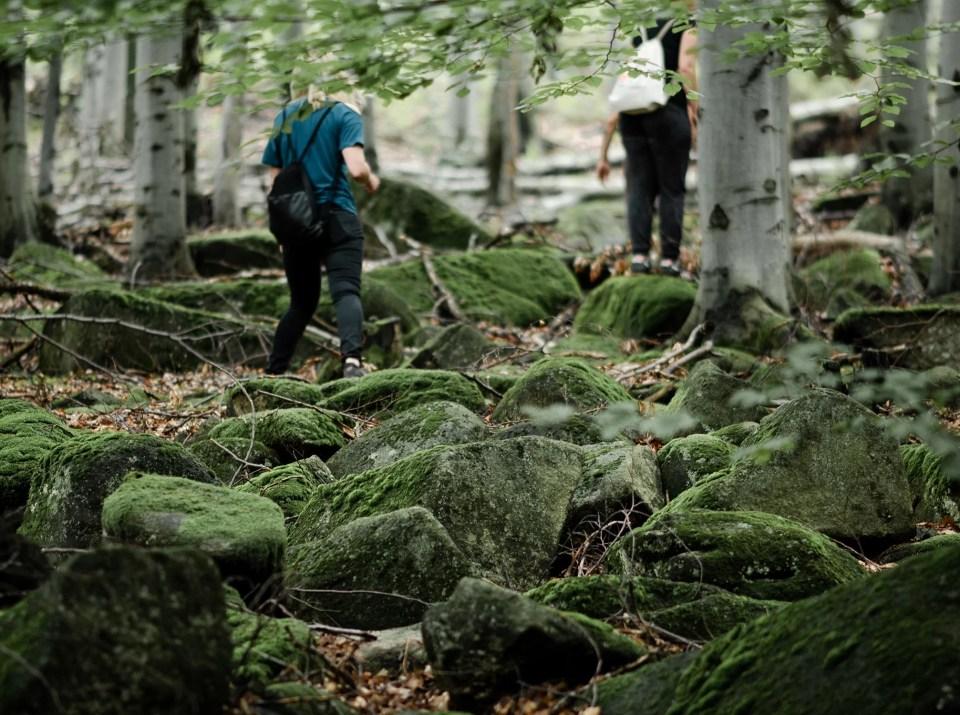 Wędrówki po lesie