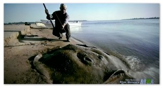Picture of a short tail stingray caught by Jeremy Wade in Argentina in the River Monsters episode Killer Sharks and Rays.