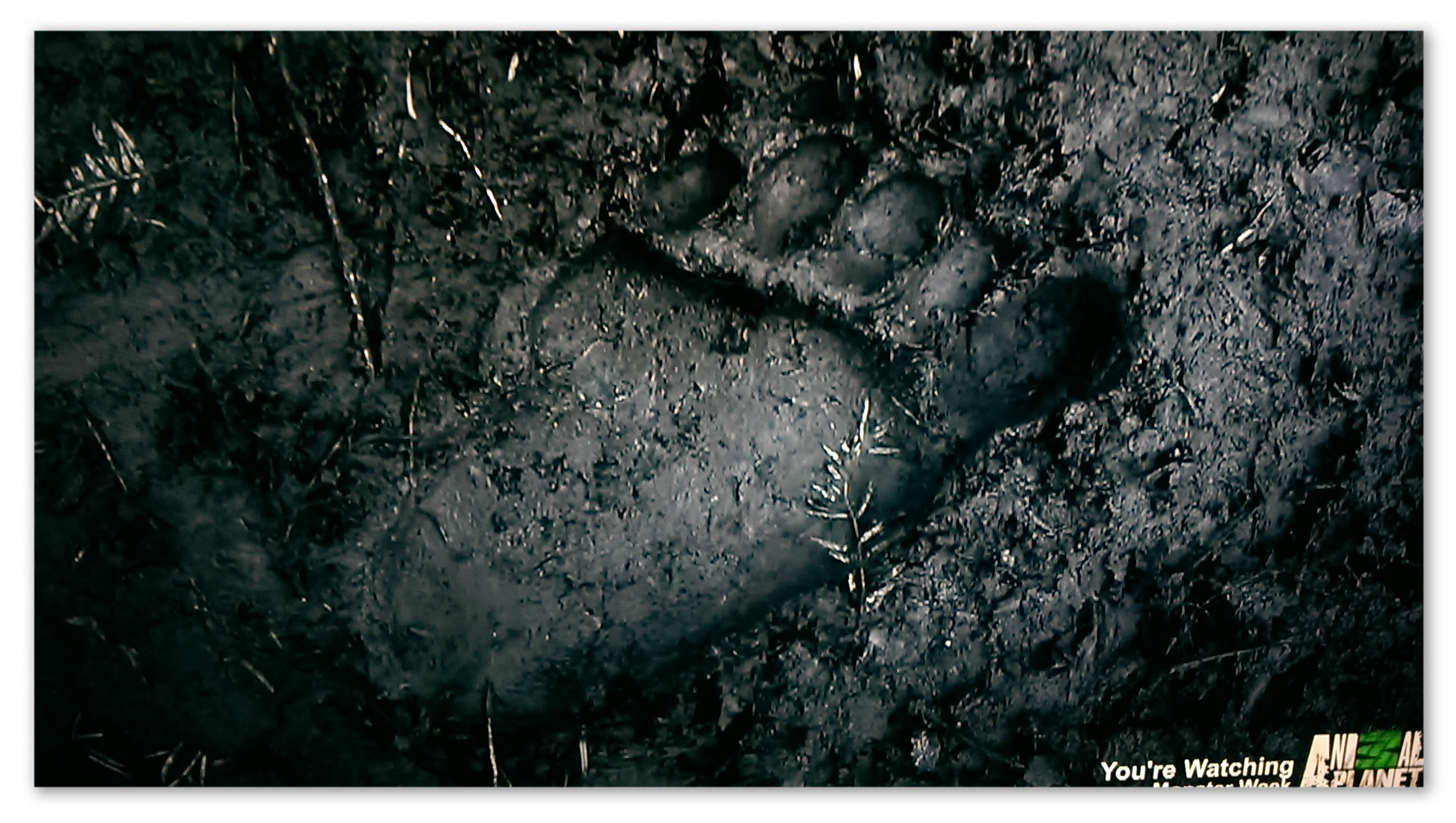 Image of a Yeti footprint