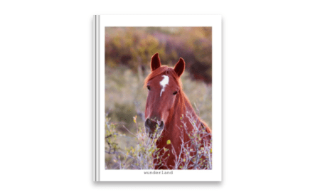 Equine Portraiture Front Cover