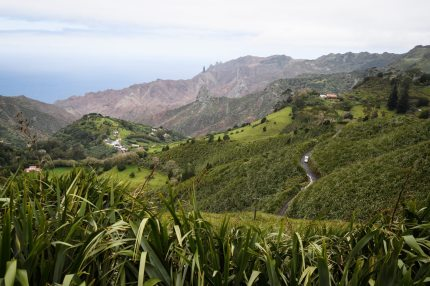 """SANDY BAY, SAINT HELENA - OCTOBER 27:  Swathes of flax plants fill the valleys and fields on October 27, 2017 in Sandy Bay, Saint Helena. Following the introduction of weekly flights to the island, resident St Helenians, known locally as """"Saints"""", are preparing for a potential influx of tourists and investment as well as enjoying the possibilities brought by much faster transport links with South Africa. Previously, travel to the island involved travelling for a week by the Royal Mail Ship (RMS) """"Saint Helena"""" from Cape Town. Saint Helena is a 46 square mile island in the South Atlantic which has been under British control since 1834.  (Photo by Leon Neal/Getty Images)"""