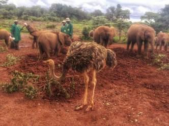 IMG 20150507 WA0012 01 - Een plog over Kenya, adoptie en olifanten.