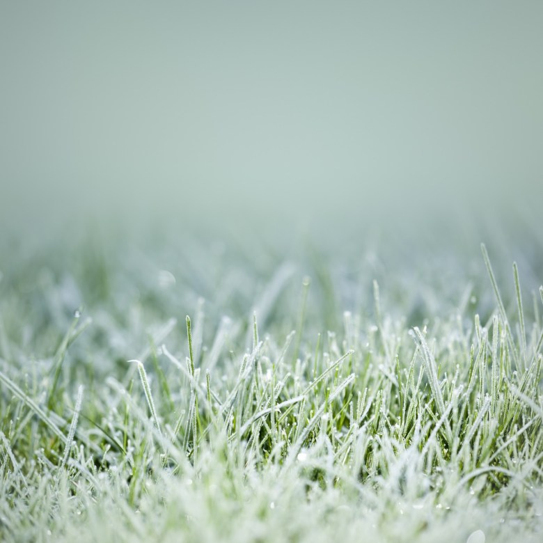 kunstgras winter
