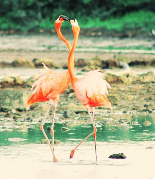 IMG 4489 - DIY de Roze Flamingo