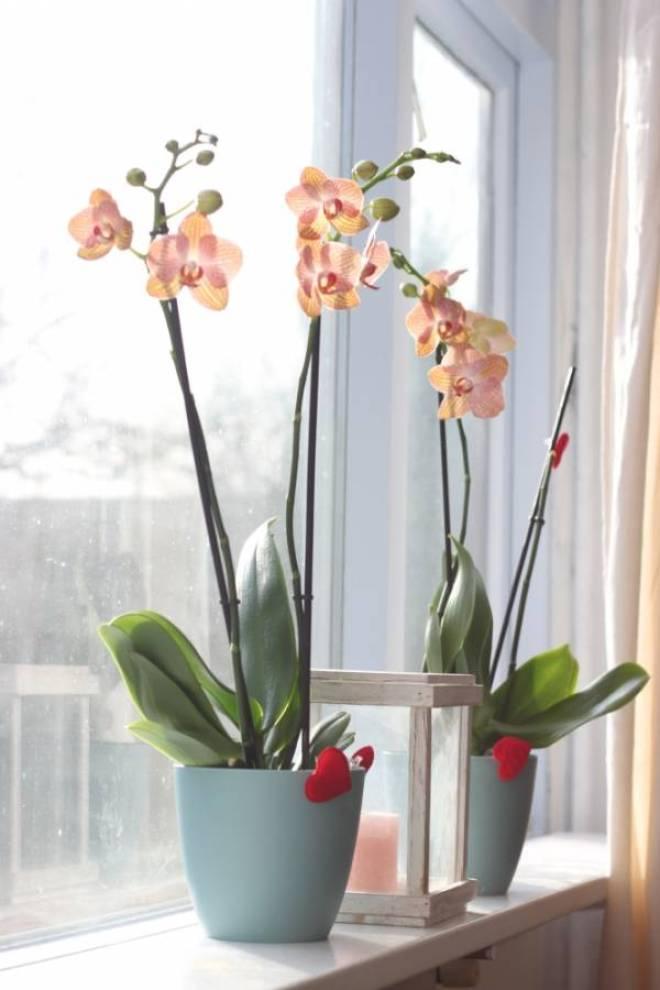 IMG 0296 - Valentijnsdag | Zeg het met bloemen!