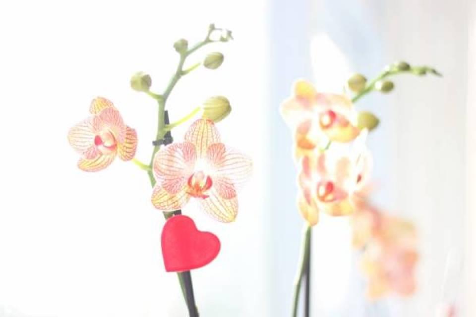 IMG 0300 - Valentijnsdag | Zeg het met bloemen!