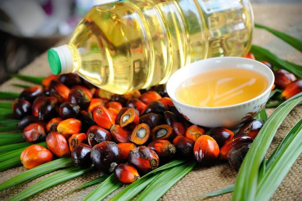 Palm Oil – Introduction, Benefits, and Usage
