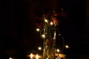 Roses and Christmas lights at solstice 2011