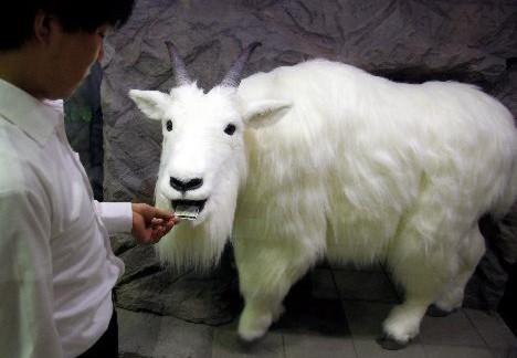 La cabra en cuestión