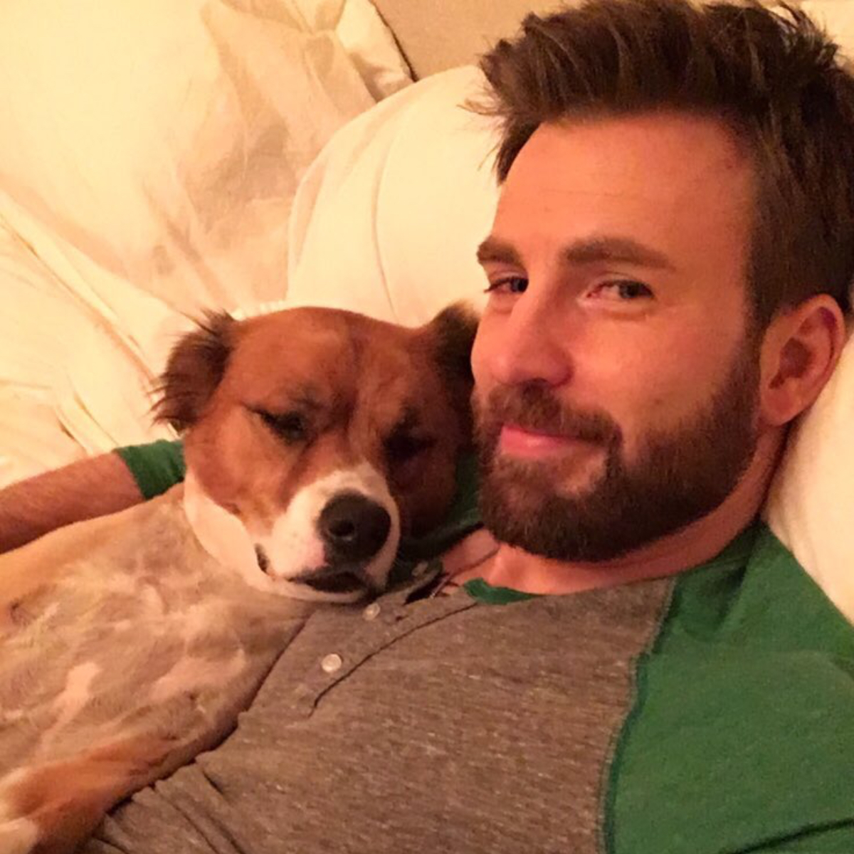 Chris Evans shares ADORABLE new pictures with his rescue dog Dodger in  honour of International Dog Day | PINKVILLA