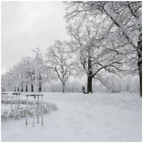 Zdjęcie przedstawia śnieżny krajobraz