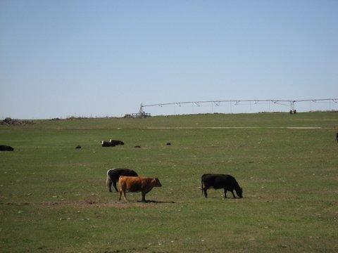 SHOSHONE FARM