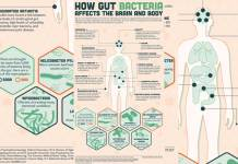 How Gut Bacteria Affects The Brain And Body. [infographic]