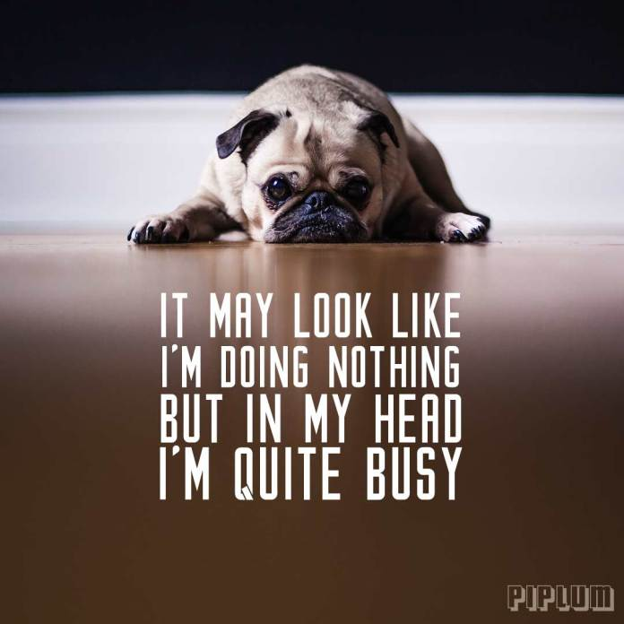 Funny quote. Pug chilling on the ground and doing nothing.