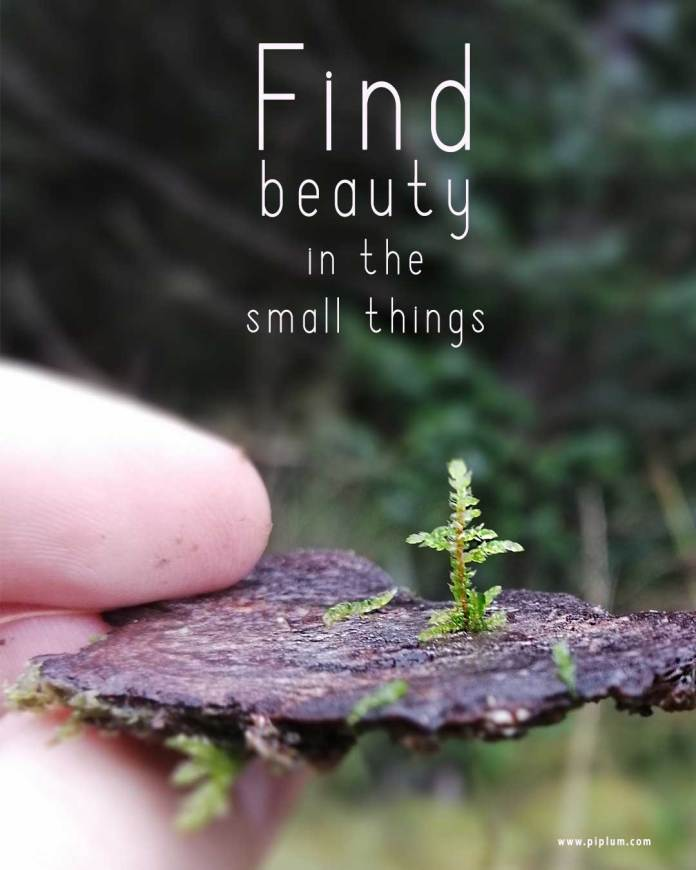 find-beauty-in-the-small-things-inspirational-quote-piplum-eco-nature-natural