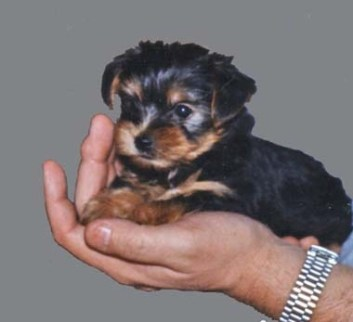 puppy_tina.jpg