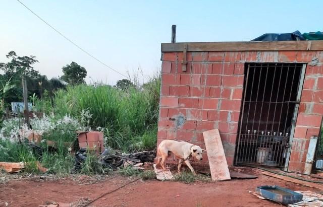 Em Piracicaba, cão é resgatado com maus-tratos