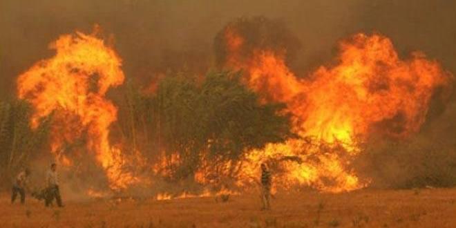 Britanya Alevi Federasyonu'ndan Dersim ormanlarının yakılmasına tepki