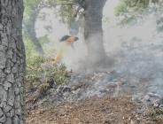 Dersim'deki orman yangını: Sadece üç bölgede 550 hektar kül oldu