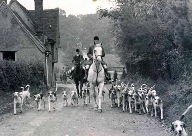 The hunt riding out