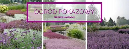 Odwiedziny i zakupy roślin w szkółce roślin wrzosowatych Majewscy