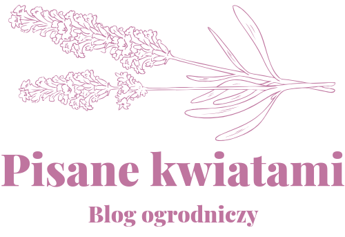 Pisane kwiatami blog ogrodniczy