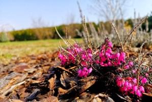 wiosenny ogród