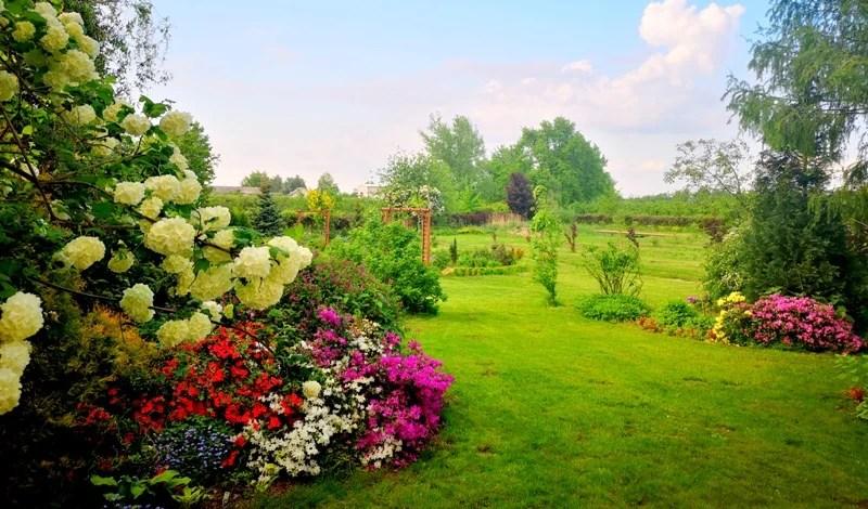 widok z tarasu na ogród