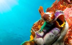 zonas-de-inmersion-piscis-diving-costa-brava-boreas