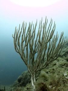 zona-planetes-inmersion-piscis-diving