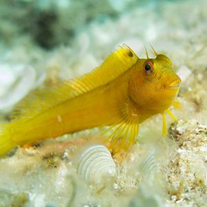 curso-primeros-auxilios-piscis-diving