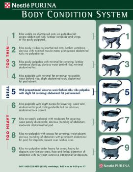Check out this chart to see if your cat is a healthy weight.