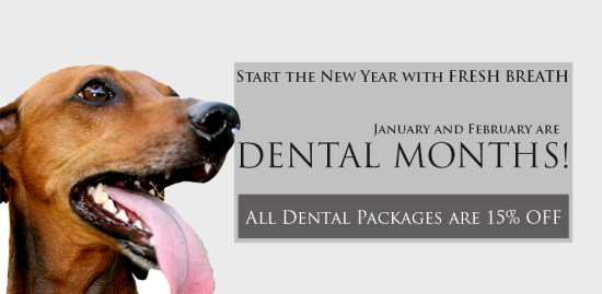 Dental Months