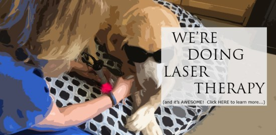 We're Doing Laser Therapy