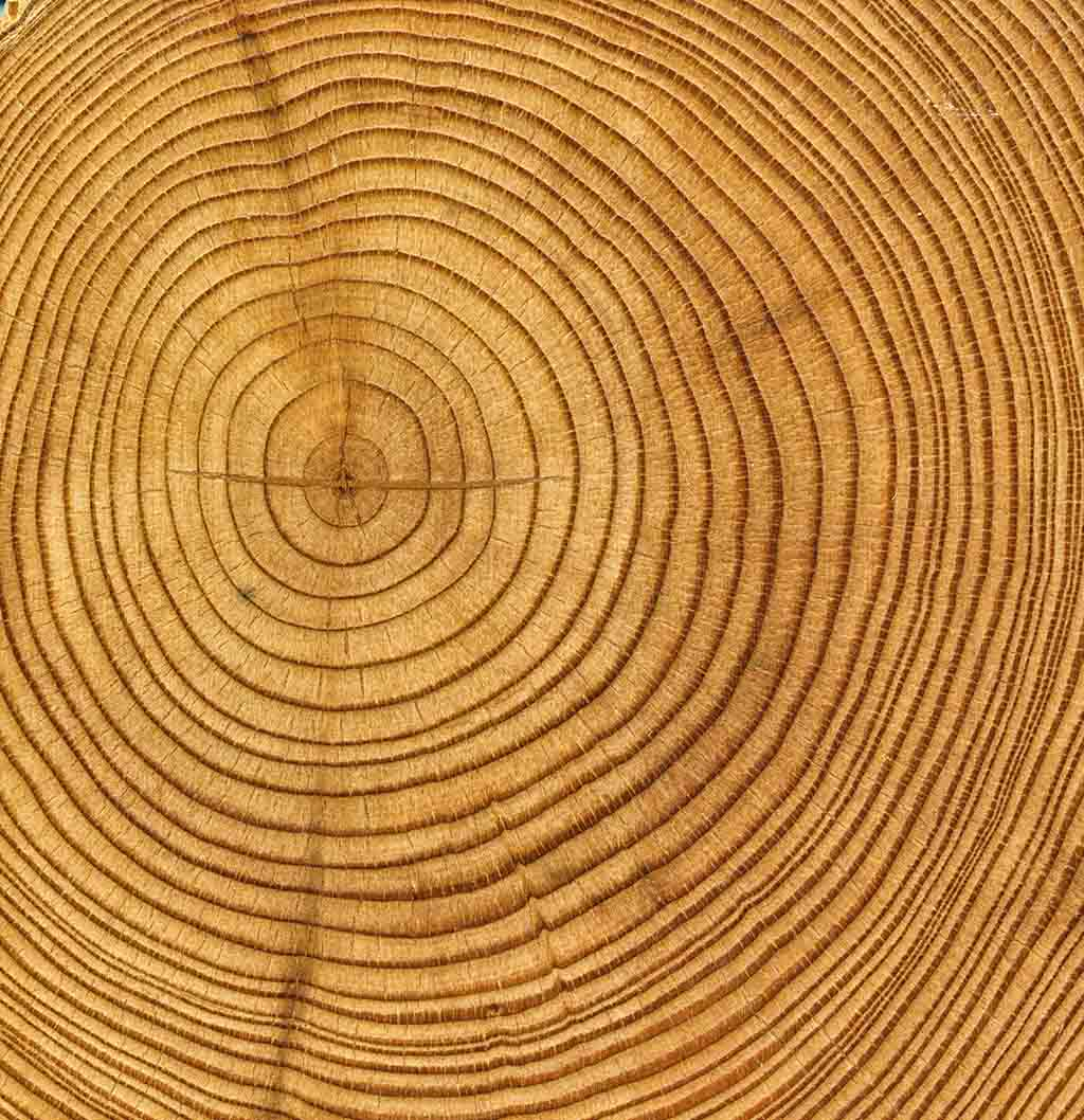 Tree Rings Tell Many Tales