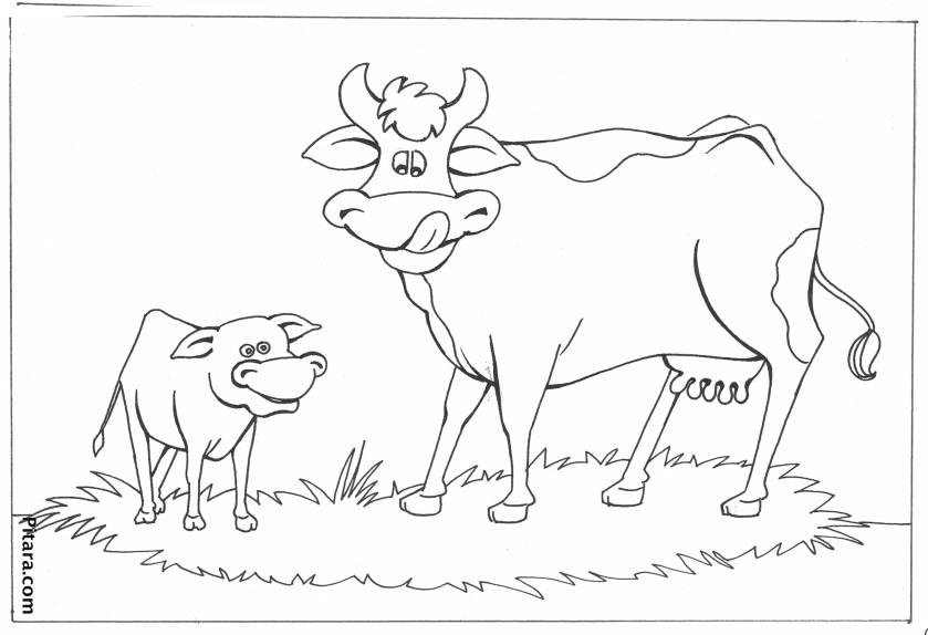 buffalo – coloring page  pitara kids network