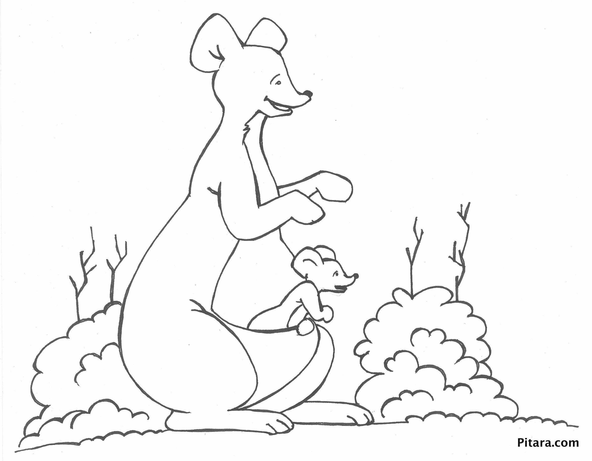 Kangaroo Amp Joey Coloring Page