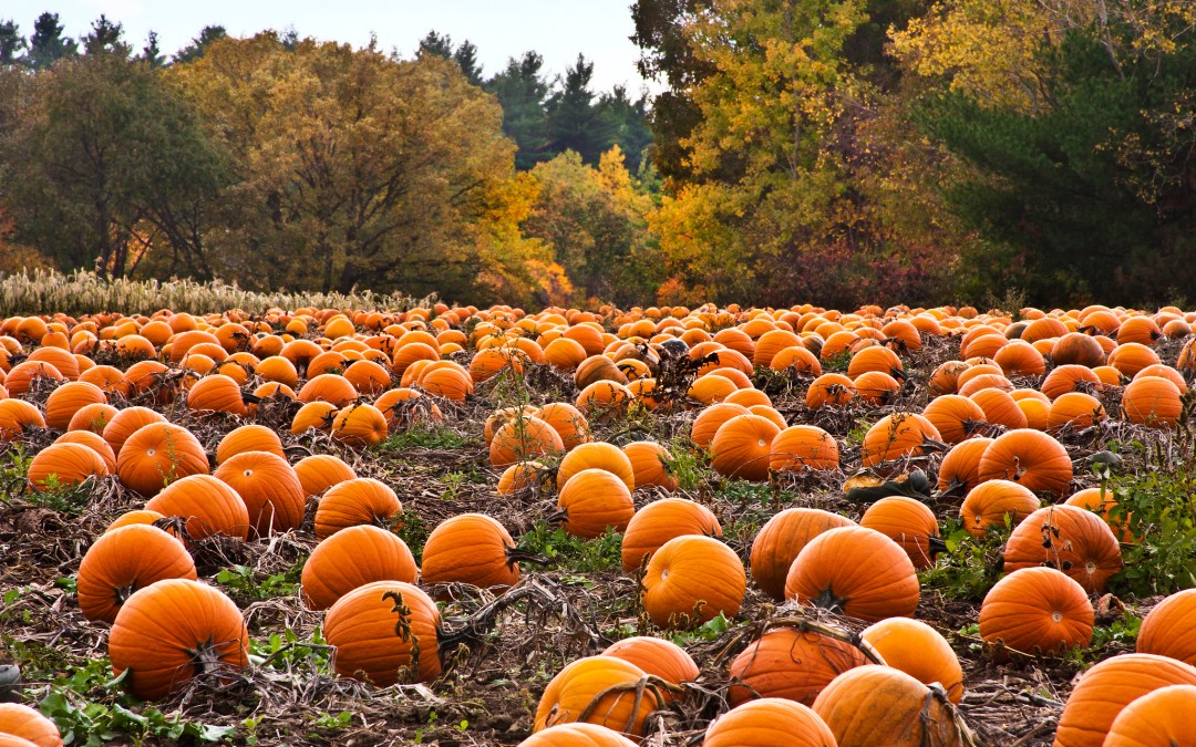 Best Pumpkin Patches Near Pittsburgh