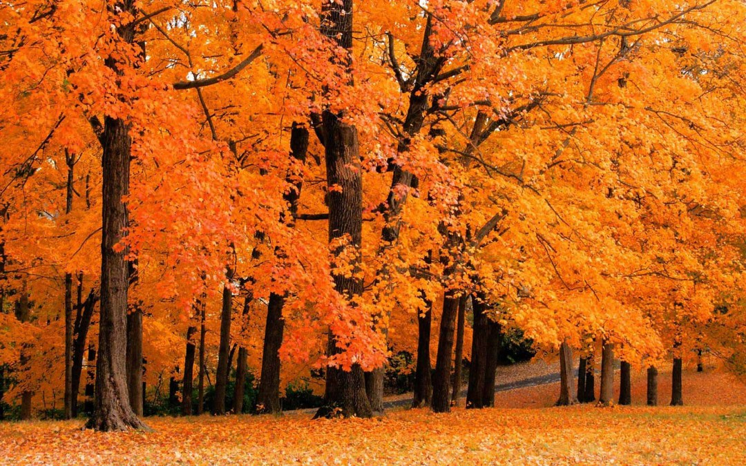 5 Places to Check Out Fall Foliage Around Pittsburgh